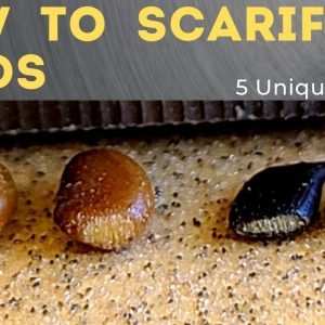 5 Ways to Scarify Seeds - Seed Scarification 101