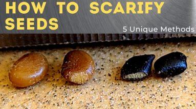 5 Ways to Scarify Seeds - Seed Scarification 101