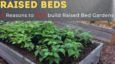 6 Reasons Not to Make Raised Bed Gardens