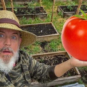 Growing Big Tomatoes and Vegetables Naturally
