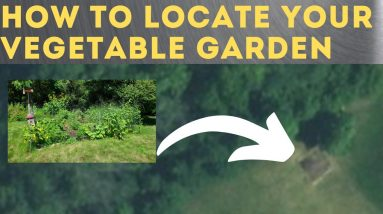 How to Choose a Location for your Vegetable Garden
