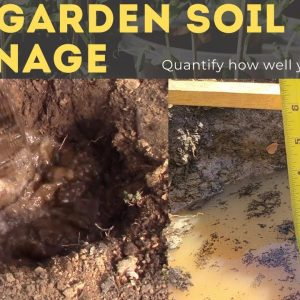 How to Test Soil Drainage