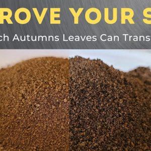 Massive Soil Improvement Using Leaf Mulch