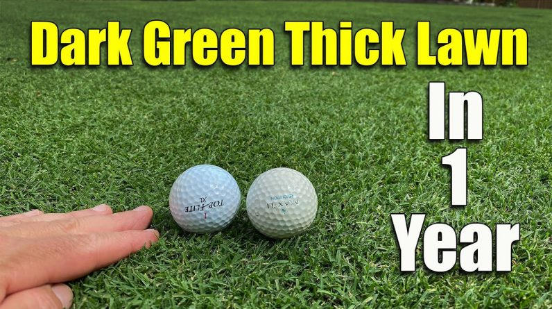 Thick Dark Green Lawn Short Grass