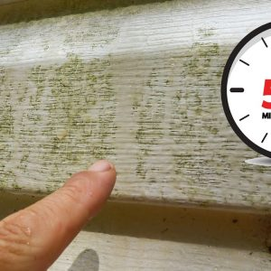Cleaning House Siding Mold and Algae in Five Minutes