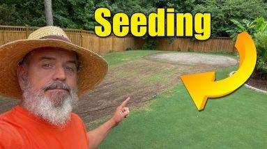 Lawn Seeding - Overseed - Summer Bermuda Seeding