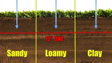 Lawn Watering Tips Water Infiltration Depth