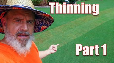 Summer Bermuda Lawn - Thinning and Scalping