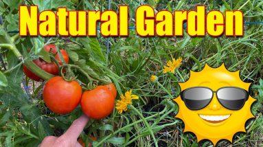 Summer Fertilizer Vegetable and Flower Gardens