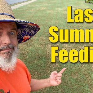 Summer Lawn Fertilizers Focus on the Soil