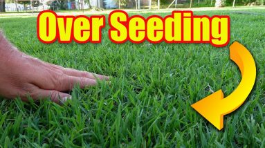 Overseeding Fall Lawns - Warm and Cool Season Grasses