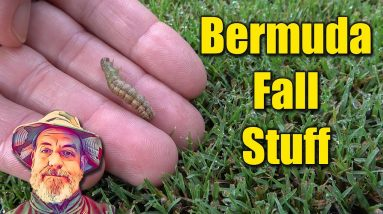 Bermuda Lawn Care Fall Products