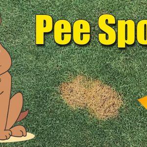 Lawn Dog Pee Spots - Dog Urine Burns in Lawn