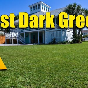 Fast Dark Green Lawn - When and What to Apply Now