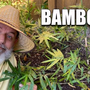 Planting Bamboo Clumping vs Spreading