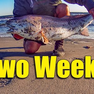 Redfish Fishing Two Weeks in 12 Minutes
