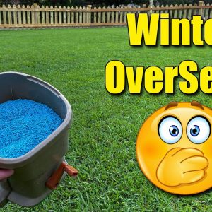Winter Over Seeding Your Lawn - The problems